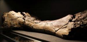 Mastodonti02 foto Tanja Verboten – kopija